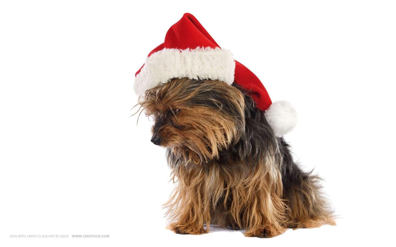 Perro con sombrero de navidad